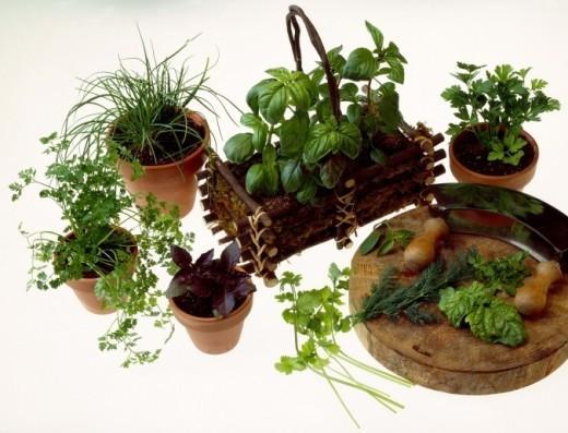 Adipiscor usos de las hierbas arom ticas y especias en - Plantas aromaticas en la cocina ...