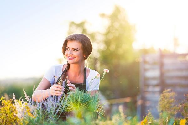 Adipiscor las plantas el amuleto para atraer energ a - Energias positivas y negativas ...