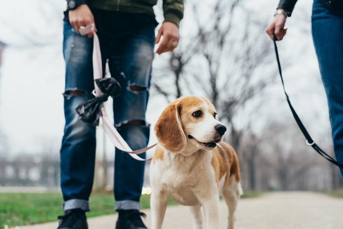 lesiones que pueden causar el mal uso de las correas te tu perro